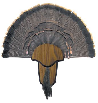 Picture of HUNTERS SPECIALTIES INC Turkey HS 00849 TURKEY TAIL BEARD MOUNT KIT 21291008490