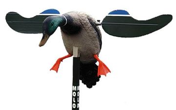 Picture of MOJO HUNT WISE Baby Mojo MOJO HW4401 BABY DRAKE        6V DECOY 816740044019